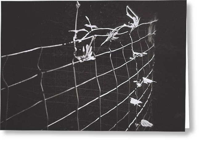Vine On A Fence Greeting Card