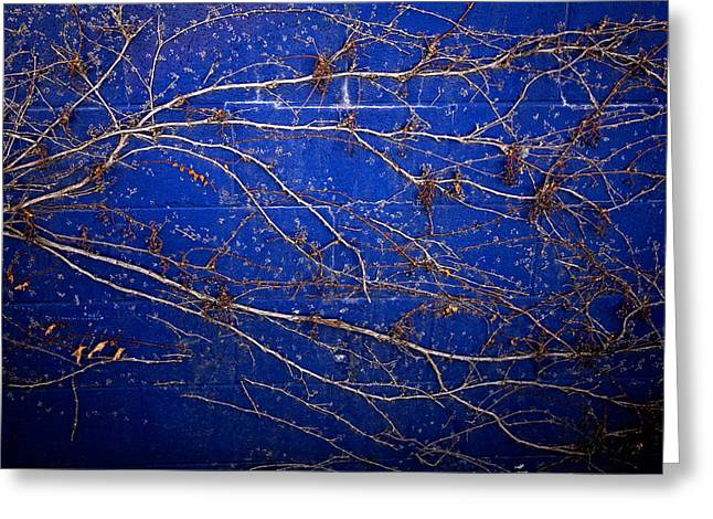 Vine On Blue Wall Greeting Card by Dave Garner