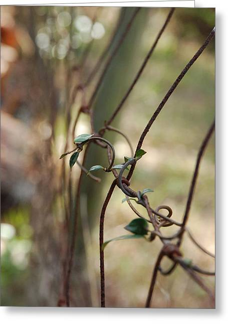Vine On Rusted Fence Greeting Card