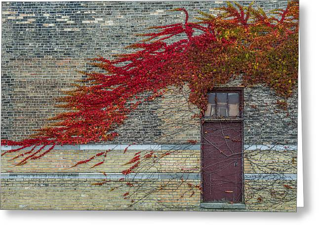 Vine Over Door Greeting Card by Paul Freidlund