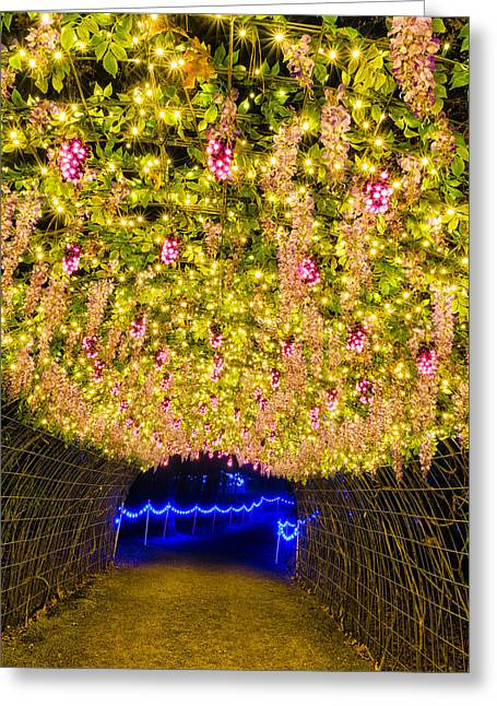 Vine Tunnel Greeting Card