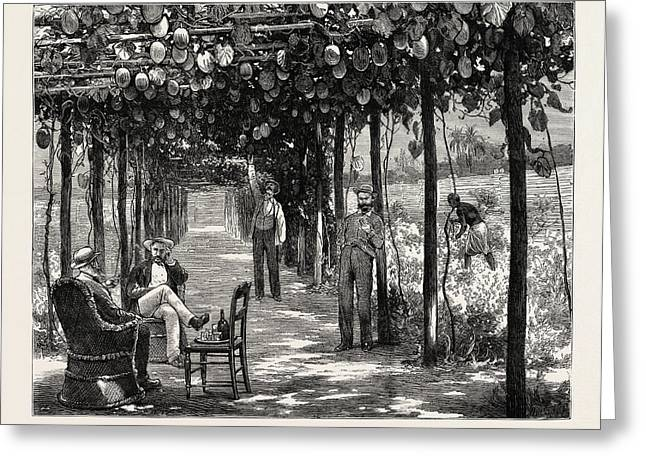 Vinery Of Maracitja, At Emboma, Congo River Greeting Card by African School