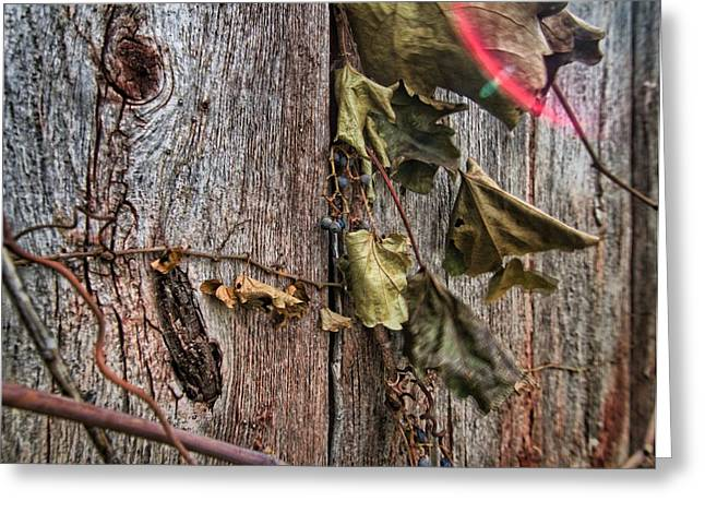 Vines And Barns Greeting Card
