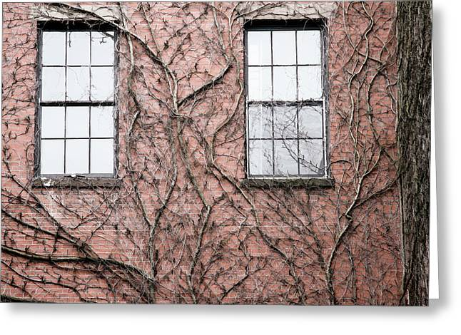 Vines And Brick Greeting Card