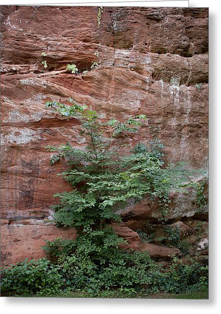Vines And Canyon Walls Greeting Card