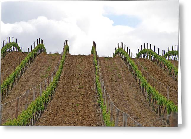 Vines Flow Over The Landscape Greeting Card