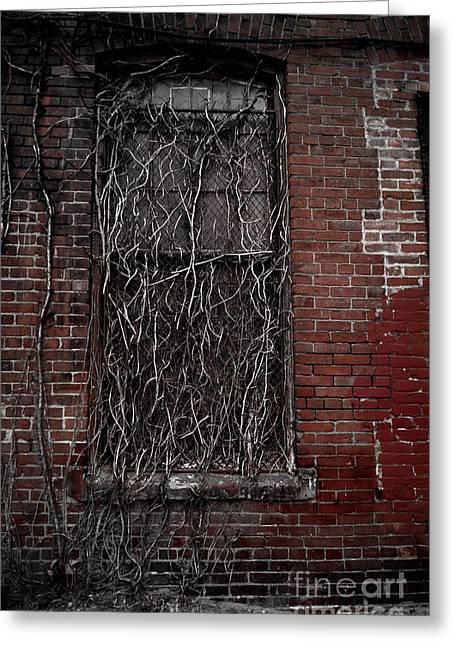 Vines Of Decay Greeting Card by Amy Cicconi