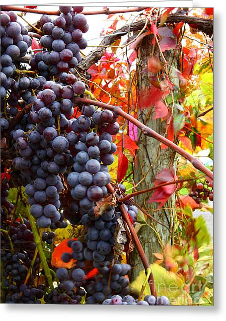 Vines Of October Greeting Card by Roger Bailey