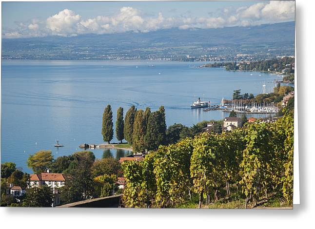 Vines Over Lake Geneva Greeting Card by Rob Hemphill