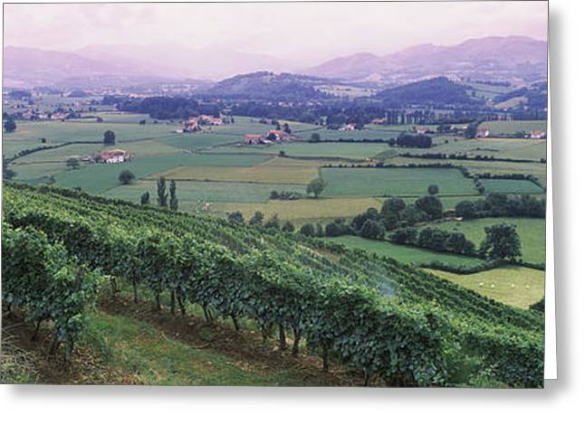 Vineyard Above Saint-jean-pied-de-port Greeting Card by Panoramic Images