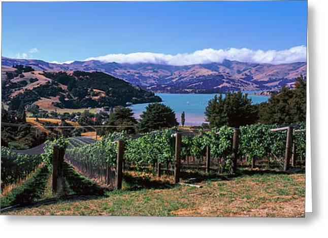 Vineyard, Akaroa Harbour, Banks Greeting Card by Panoramic Images