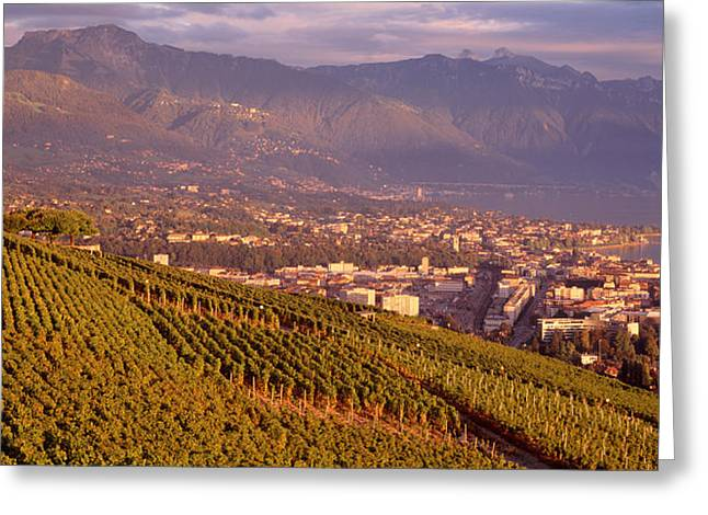 Vineyard At A Hillside, Lake Geneva Greeting Card by Panoramic Images