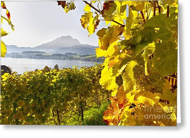 Vineyard At Lake Lucerne Greeting Card by George Oze