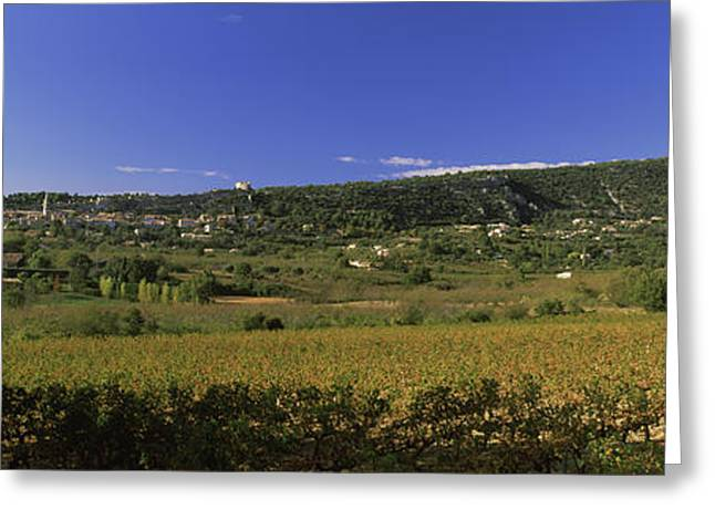Vineyard At Saint-saturnin-les-apt Greeting Card by Panoramic Images