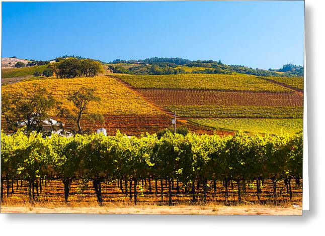 Vineyard Colors Greeting Card