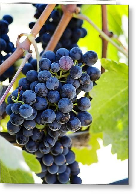 Vineyard Grapes Greeting Card by Charmian Vistaunet