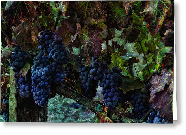 Greeting Card featuring the photograph Vineyard Grapes On Vine Number Three by Bob Coates