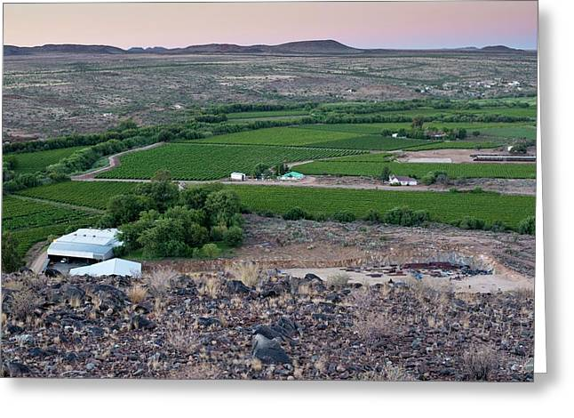 Vineyard In Arid Terrain Greeting Card by Tony Camacho