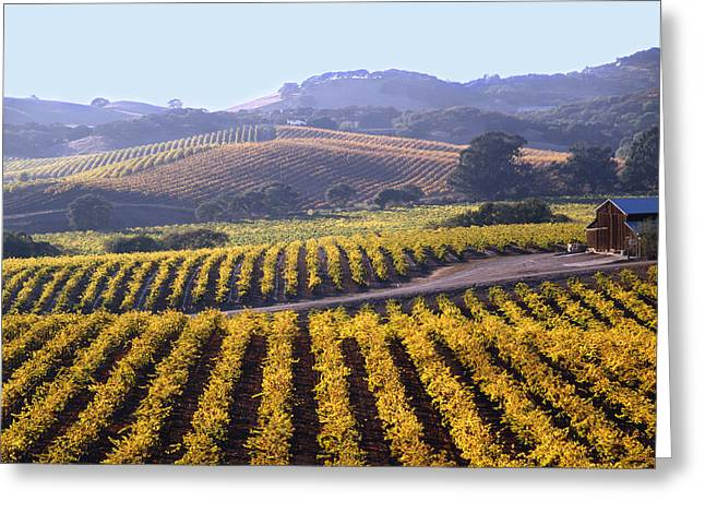 6b6386-vineyard In Autumn Greeting Card