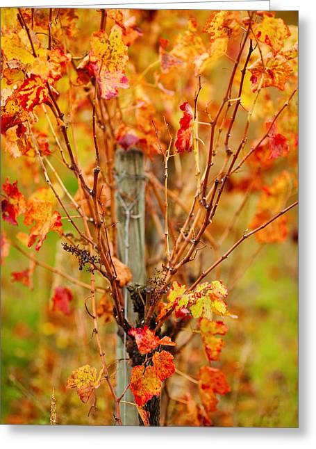 Vineyard In Autumn, Gaillac, Tarn Greeting Card