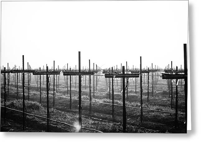 Greeting Card featuring the photograph Vineyard In Fog by Randy Bayne