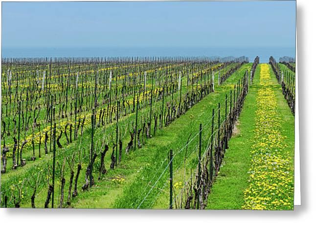 Vineyard In Niagara On The Lake Greeting Card
