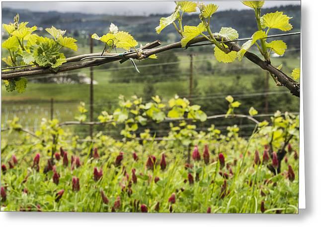 Vineyard In Spring Greeting Card