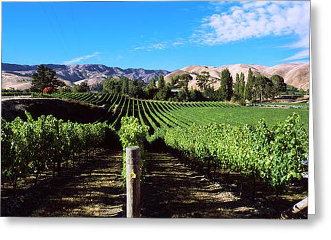 Vineyard, Marlborough Region, South Greeting Card by Panoramic Images