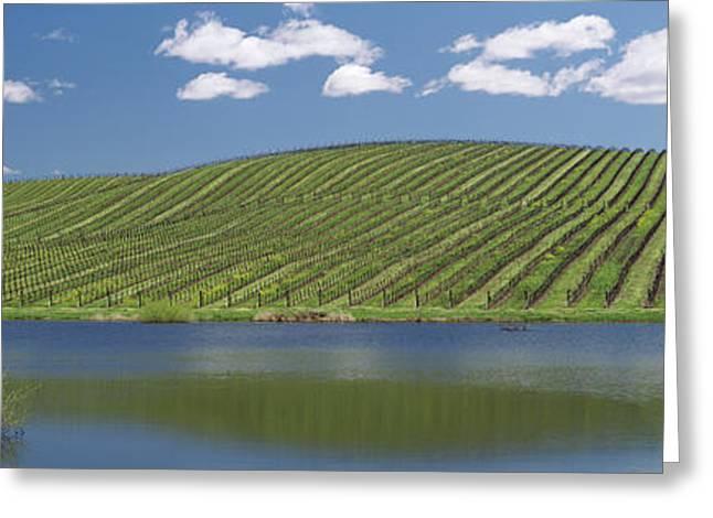 Vineyard Near A Lake, Napa County Greeting Card