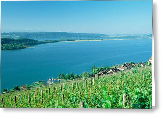 Vineyard Near A Village, Lake Biel Greeting Card by Panoramic Images