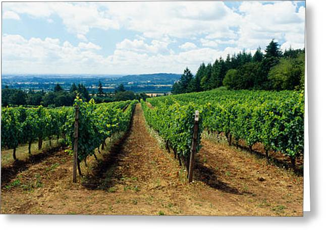 Vineyard On A Landscape, Adelsheim Greeting Card by Panoramic Images