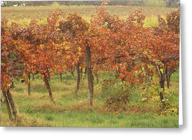 Vineyard On A Landscape, Apennines Greeting Card by Panoramic Images