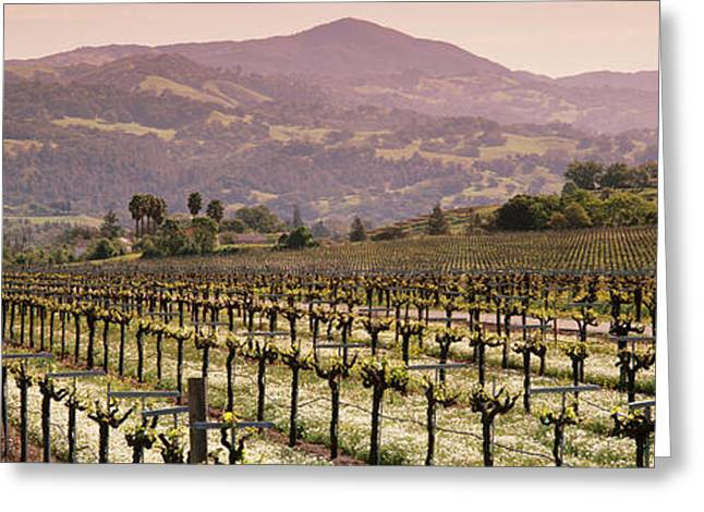 Vineyard On A Landscape, Asti Greeting Card
