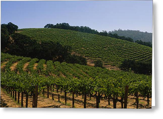 Vineyard On A Landscape, Napa Valley Greeting Card by Panoramic Images