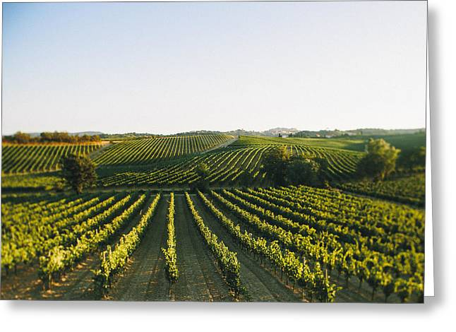 Vineyard Patchwork Greeting Card by Clint Brewer