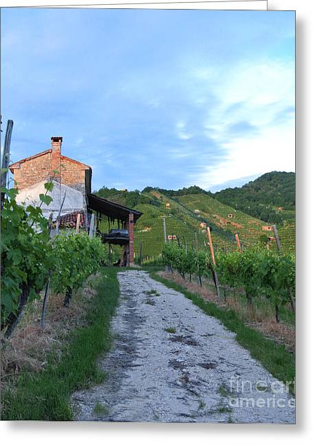 Vineyard Path Greeting Card
