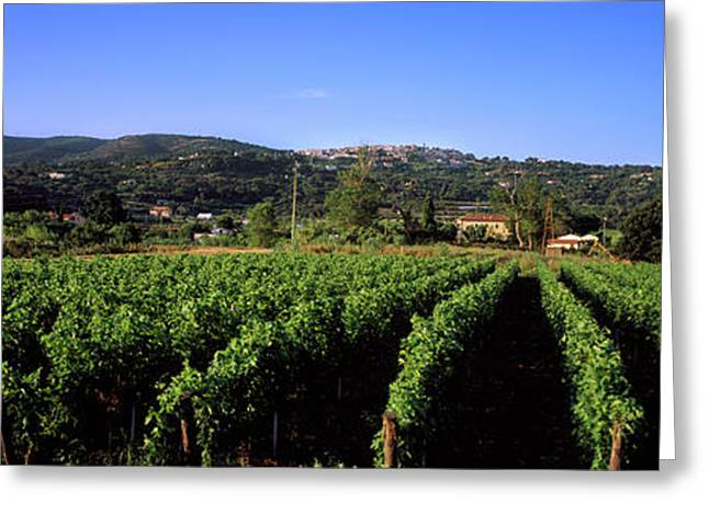 Vineyard, Portoferraio, Island Of Elba Greeting Card by Panoramic Images