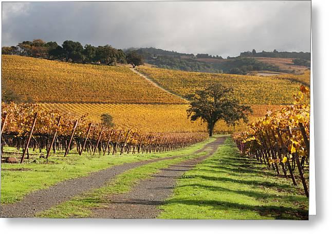Vineyard Roads Greeting Card by Kent Sorensen
