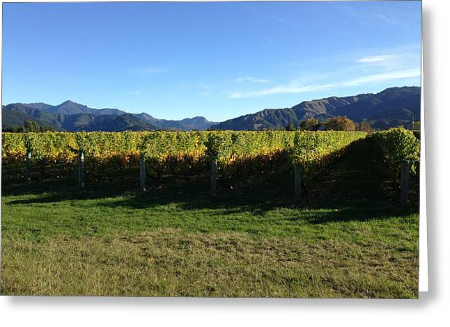 Vineyard Greeting Card by Ron Torborg