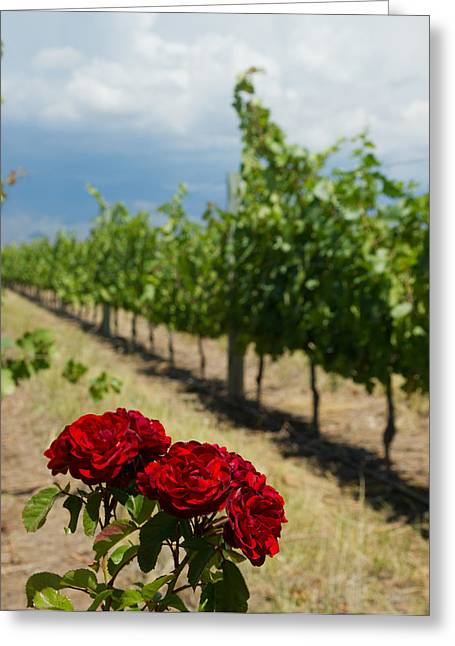 Vineyard Rose Greeting Card