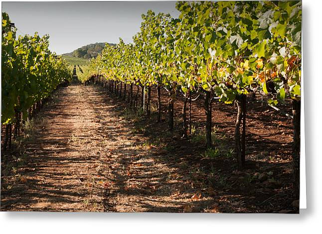 Vineyard Soil Of Sonoma Greeting Card by Kent Sorensen