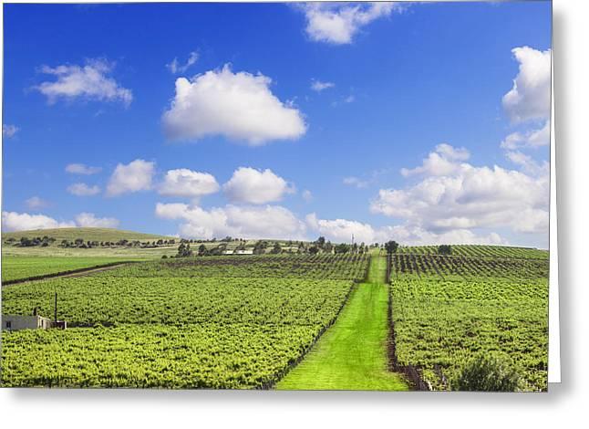 Vineyard South Australia Square Greeting Card
