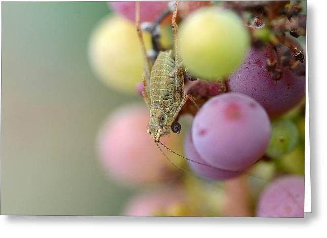 Vineyard Tourist Greeting Card