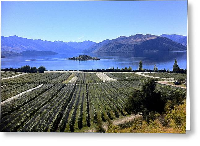 Vineyard View Of Ruby Island Greeting Card by Venetia Featherstone-Witty