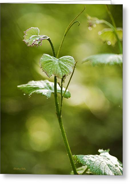Vineyard Vine Greeting Card by Christina Rollo