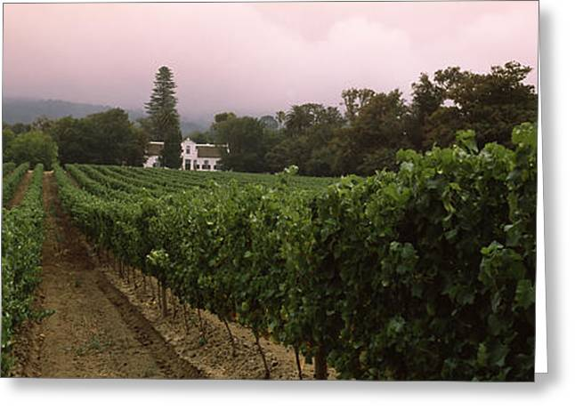 Vineyard With A Cape Dutch Style House Greeting Card by Panoramic Images