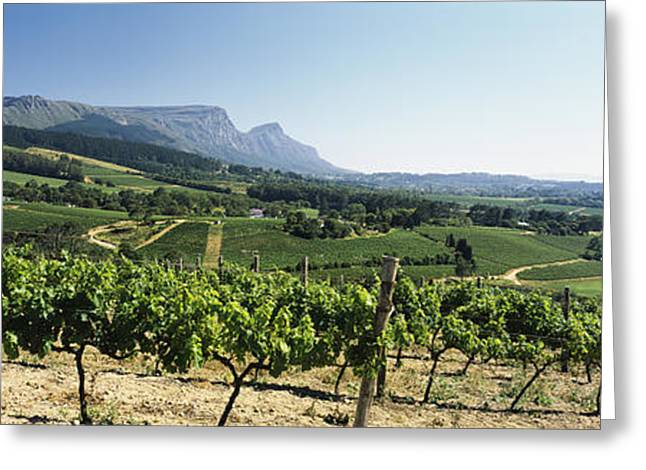 Vineyard With Constantiaberg Range Greeting Card by Panoramic Images