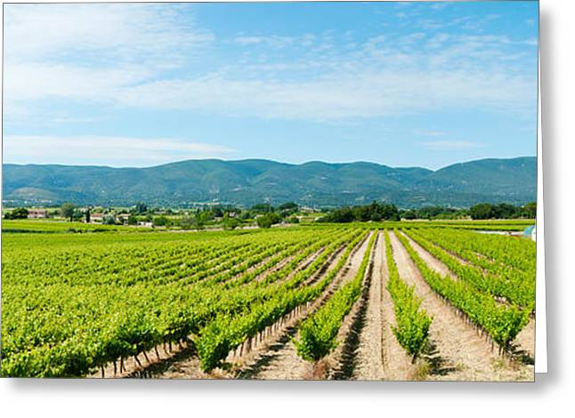 Vineyard With Mountain Greeting Card by Panoramic Images