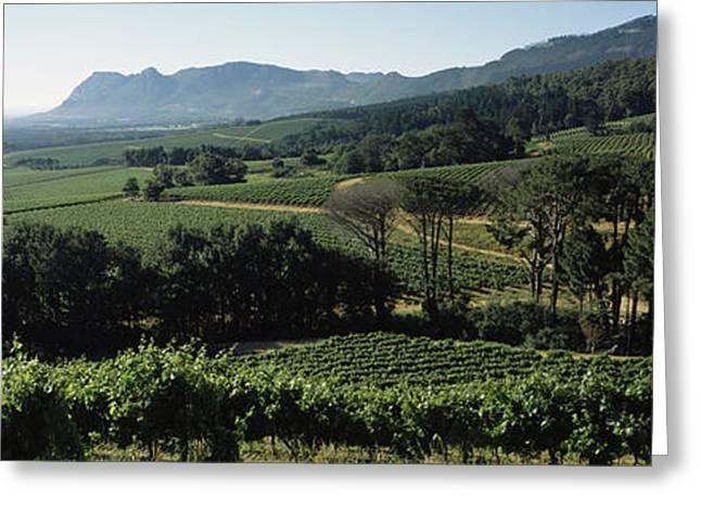 Vineyard With Mountains Greeting Card by Panoramic Images