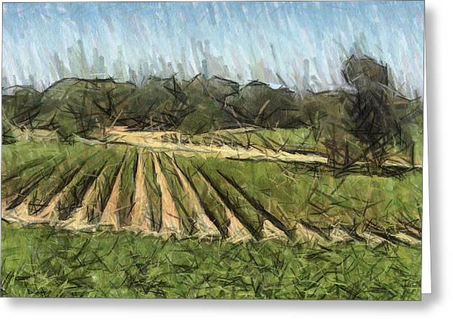 Vineyard With Oak Greeting Card by Bud Anderson